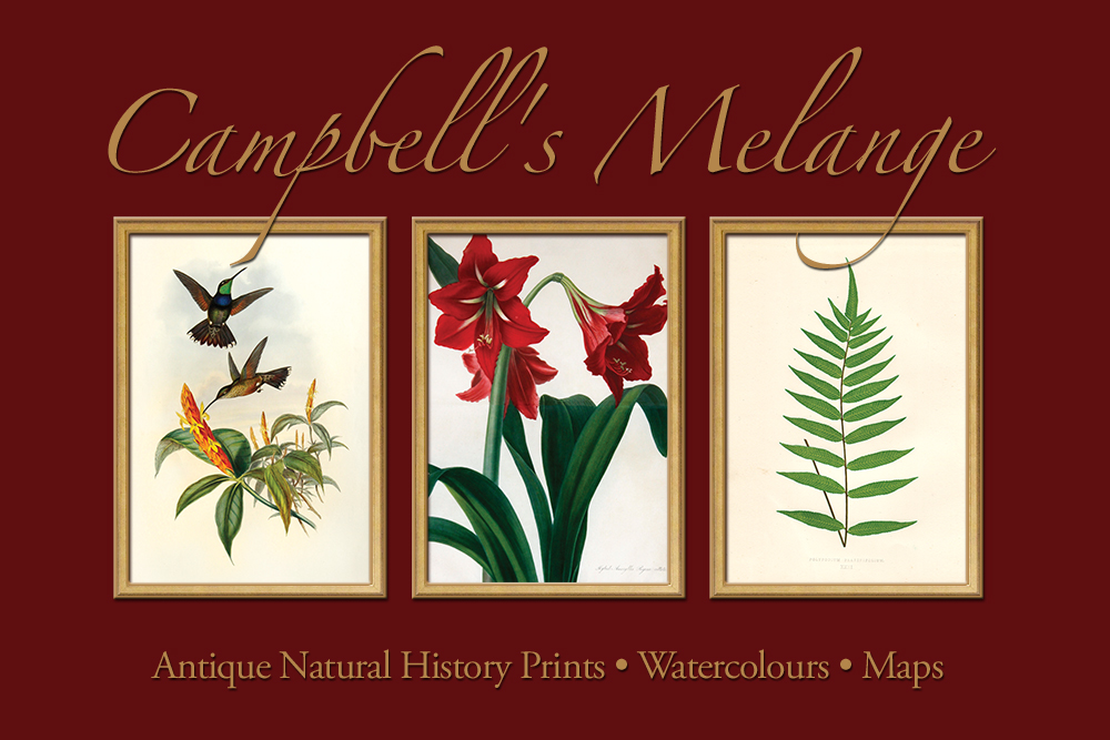 Campbell's Melange • Antique Natural History Prints • Watercolours • Maps